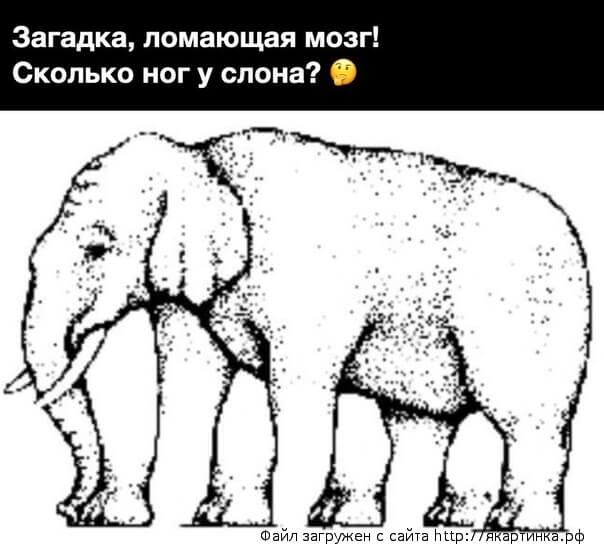 Слон загадка