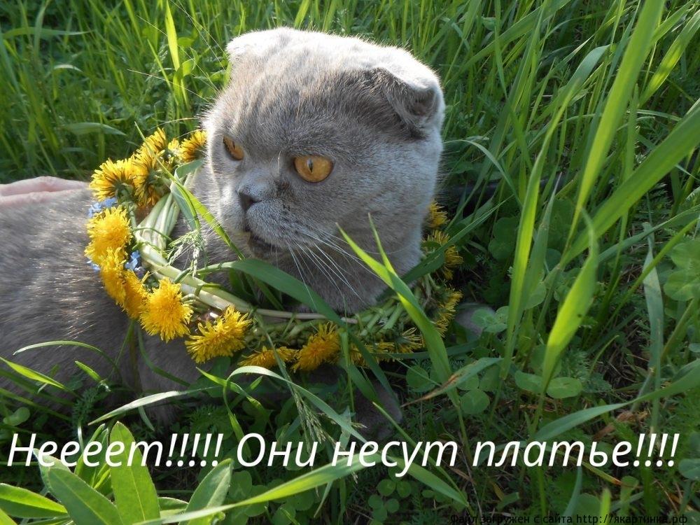 кот мем