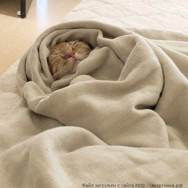 Коты в ноябре