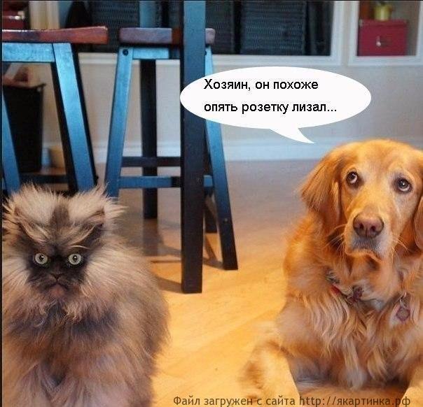Кот и электричество