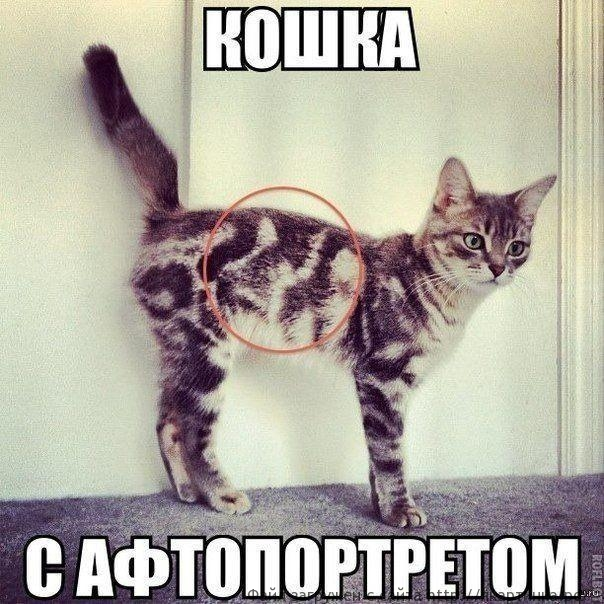 Кошка с автопортретом