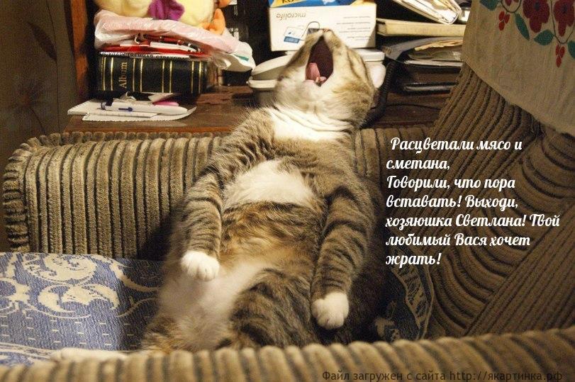 Катюша на кошачий лад!