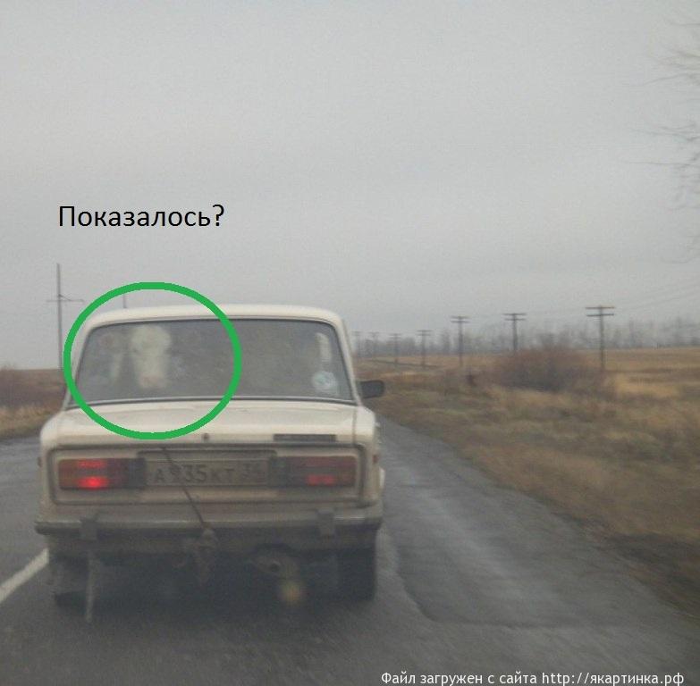 корова в машине